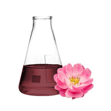 로즈힙 꽃 추출물(rosa chanina flower extract)